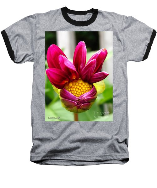 Baseball T-Shirt featuring the photograph Dahlia From The Showpiece Mix by J McCombie