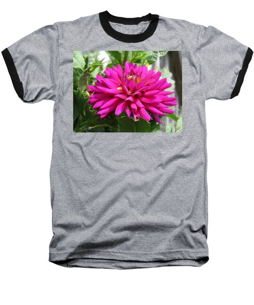 Baseball T-Shirt featuring the photograph Dahlia Named Andreas Dahl by J McCombie