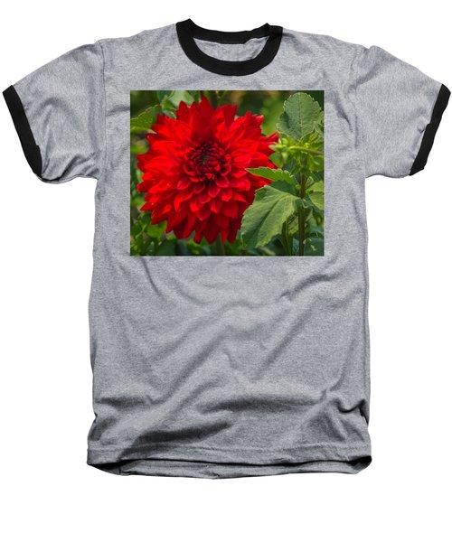 Dahlia Perfection Baseball T-Shirt