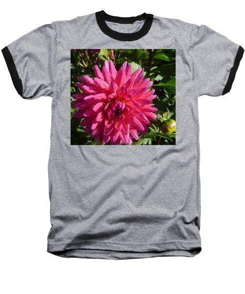 Dahlia Pink Baseball T-Shirt by Susan Garren