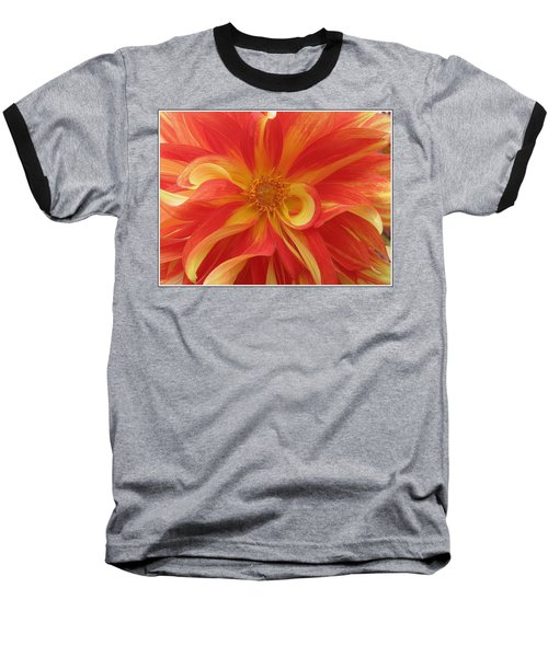 Dahlia Unfurling In Yellow And Red Baseball T-Shirt by Dora Sofia Caputo Photographic Art and Design