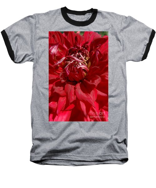 Dahlia Viiii Baseball T-Shirt by Christiane Hellner-OBrien