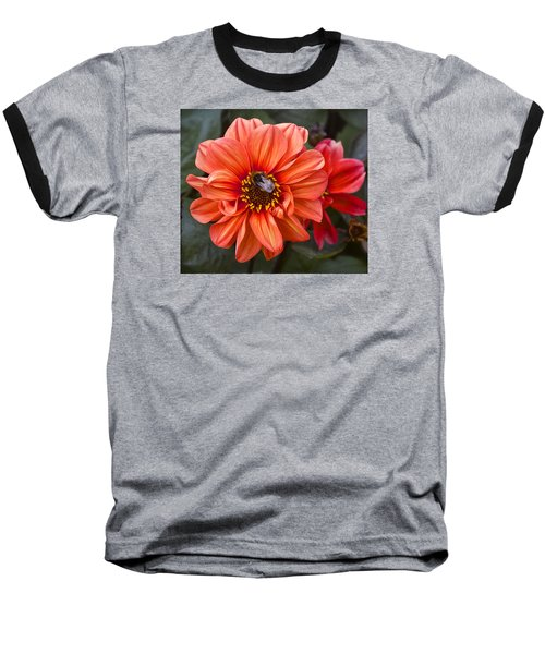 Dahlia With Bee Baseball T-Shirt by Venetia Featherstone-Witty