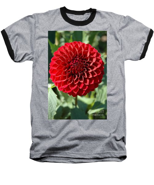 Dahlia Xii Baseball T-Shirt by Christiane Hellner-OBrien