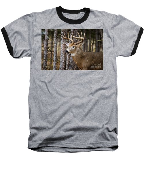Deer Buck Baseball T-Shirt