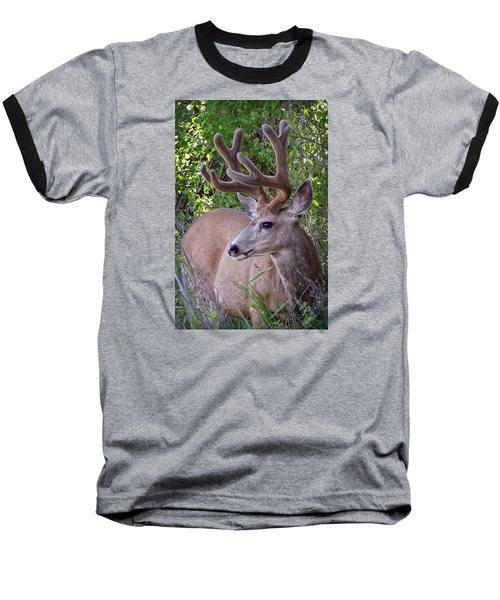 Buck In The Woods Baseball T-Shirt by Athena Mckinzie