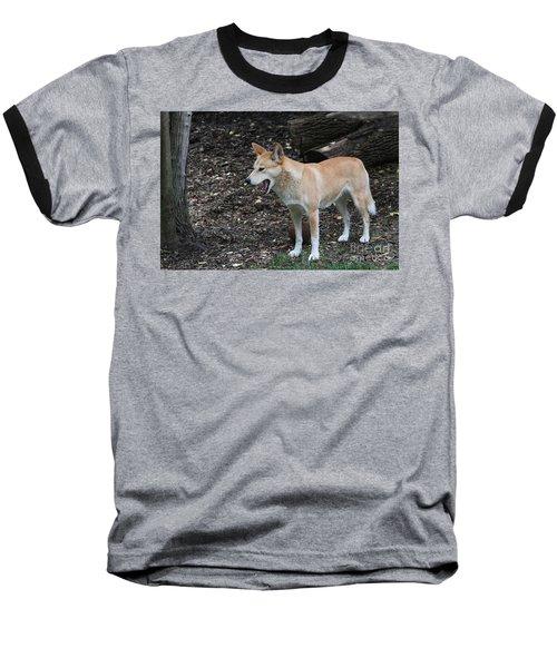 Dingo #2 Baseball T-Shirt
