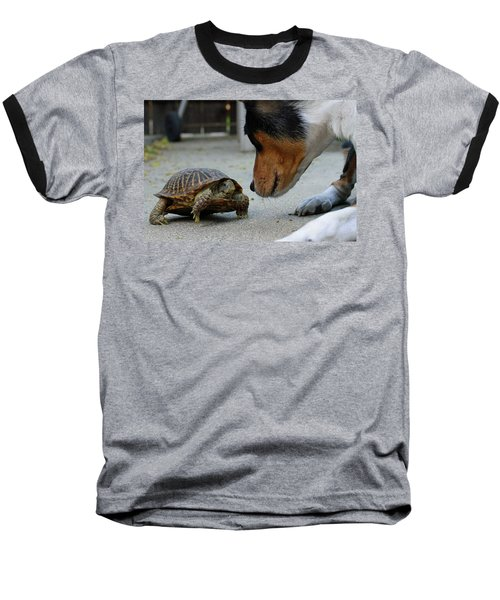 Dog And Turtle Baseball T-Shirt by Shoal Hollingsworth