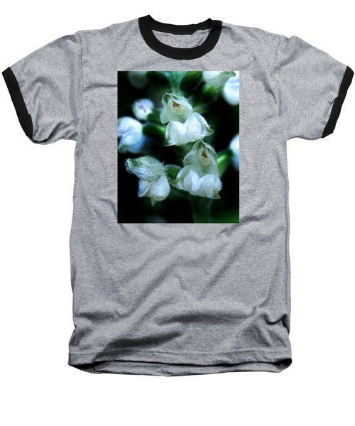 Downy Rattlesnake Plantain Orchid Baseball T-Shirt by William Tanneberger
