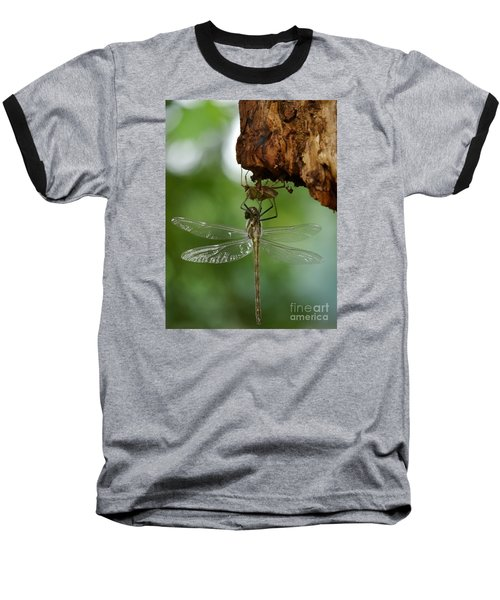 Dragonfly Baseball T-Shirt by Jane Ford