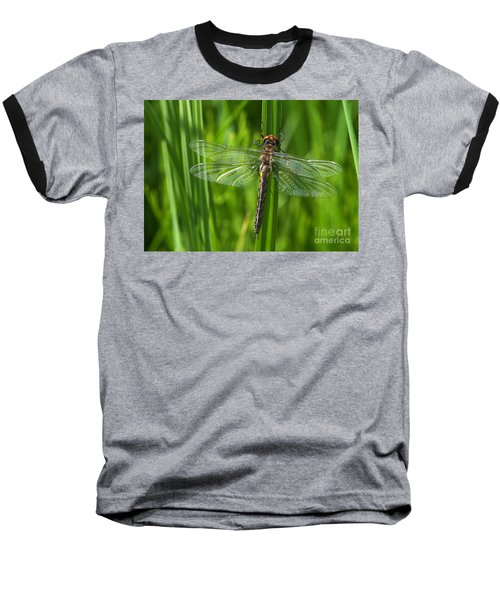Dragonfly On Grass Baseball T-Shirt