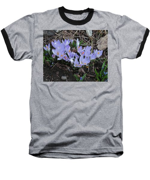 Early Crocuses Baseball T-Shirt by Donald S Hall
