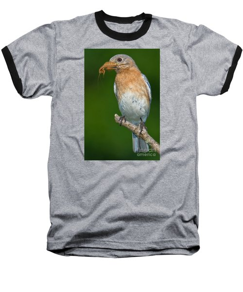 Baseball T-Shirt featuring the photograph Eastern Bluebird With Katydid by Jerry Fornarotto