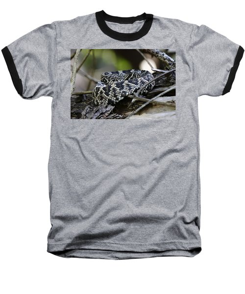 Eastern Diamondback-1 Baseball T-Shirt by Rudy Umans