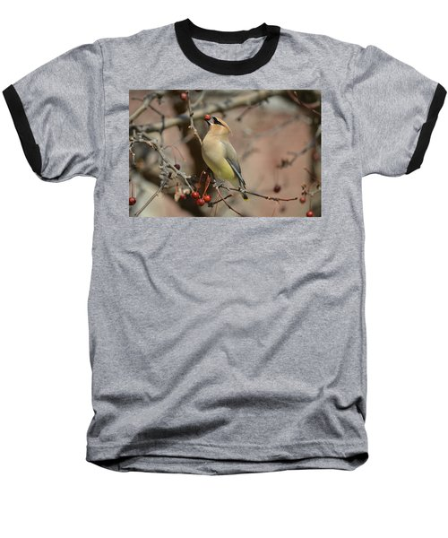 Cedar Waxwing In Winter Baseball T-Shirt by James Petersen