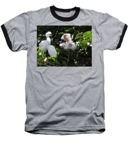 Egret Chicks Baseball T-Shirt by Ron Davidson
