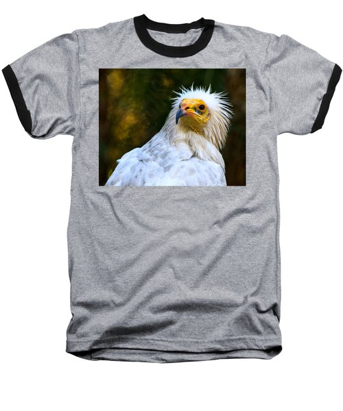 Egyptian Vulture Baseball T-Shirt