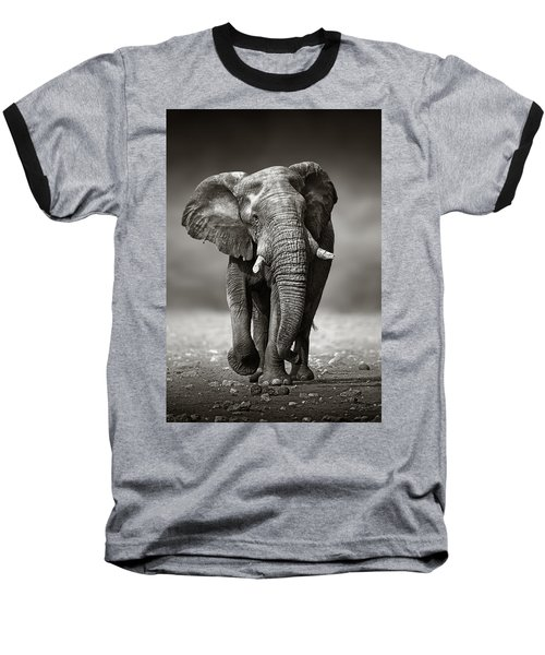 Elephant Approach From The Front Baseball T-Shirt by Johan Swanepoel