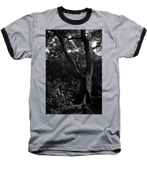 Baseball T-Shirt featuring the photograph Elizabethan Gardens Tree In B And W by Greg Reed