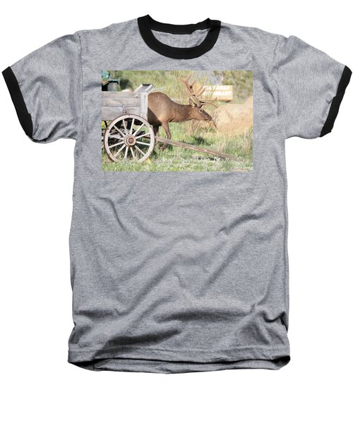 Elk Drawn Carriage Baseball T-Shirt
