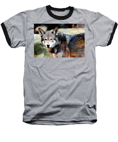 Endangered Red Wolf Baseball T-Shirt by Kathy  White