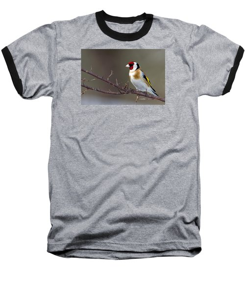 European Goldfinch  Baseball T-Shirt by Torbjorn Swenelius