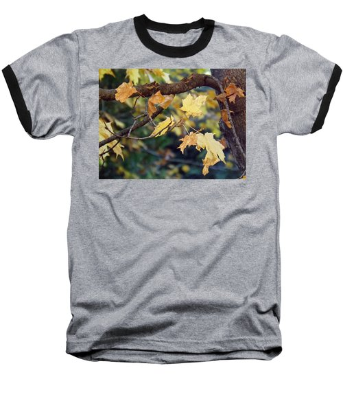 Fall Foilage Baseball T-Shirt by Brenda Brown