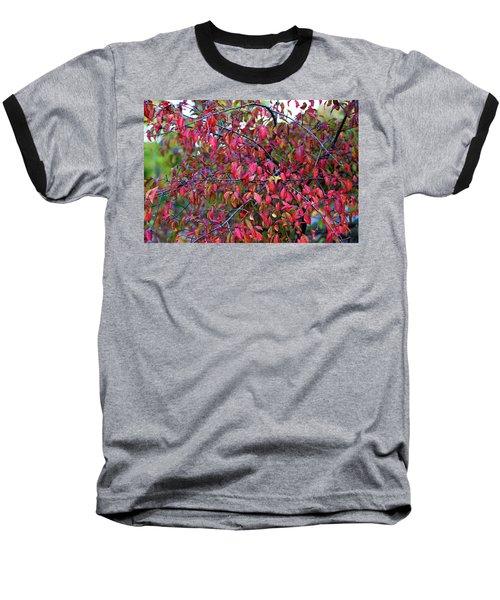 Fall Foliage Colors 05 Baseball T-Shirt