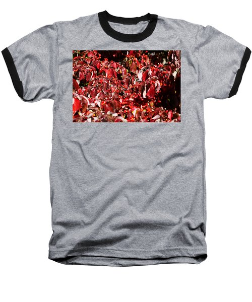 Fall Foliage Colors 08 Baseball T-Shirt