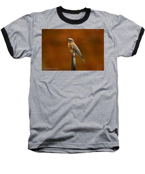 Baseball T-Shirt featuring the photograph Female Bluebird by Robert L Jackson