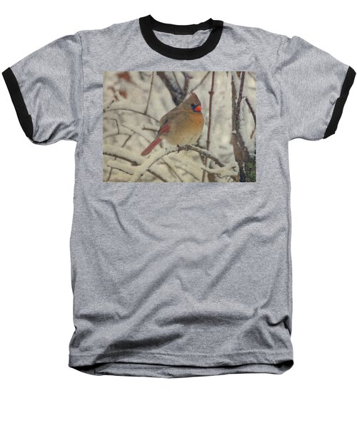 Female Cardinal In The Snow II Baseball T-Shirt