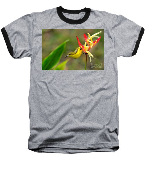 Female Olive Backed Sunbird Clings To Heliconia Plant Flower Singapore Baseball T-Shirt by Imran Ahmed