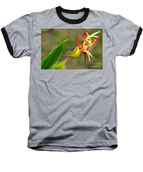 Female Olive Backed Sunbird Clings To Heliconia Plant Flower Singapore Baseball T-Shirt