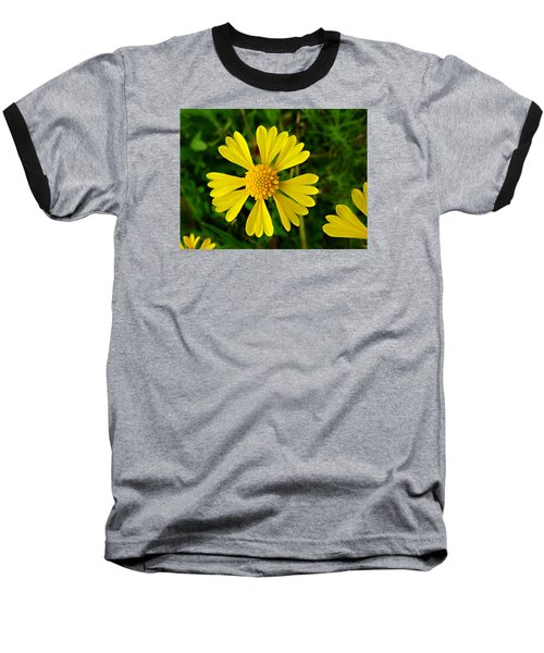 Wild Fine Leaved Sneezeweed Baseball T-Shirt by William Tanneberger