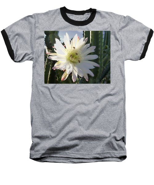 Flowering Cactus 5 Baseball T-Shirt