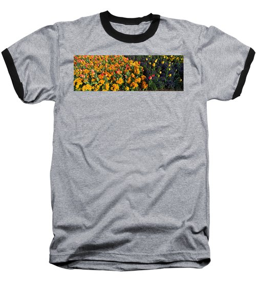 Flowers In Hyde Park, City Baseball T-Shirt by Panoramic Images