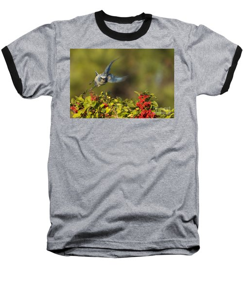 Flying Florida Scrub Jay Photo Baseball T-Shirt