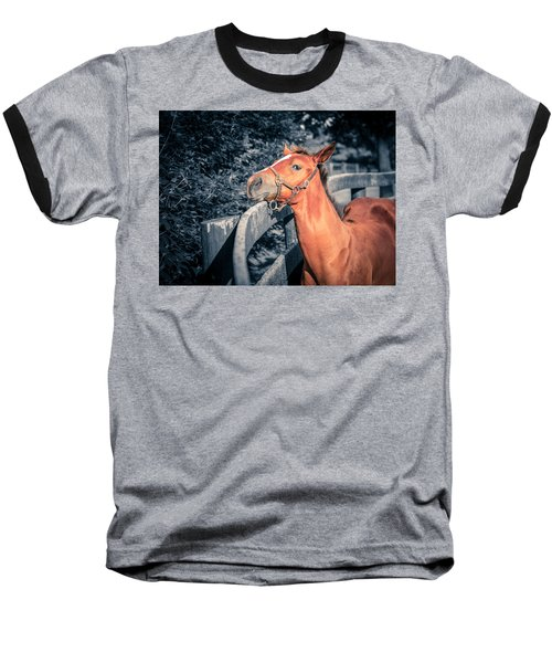Foal By The Fence Baseball T-Shirt