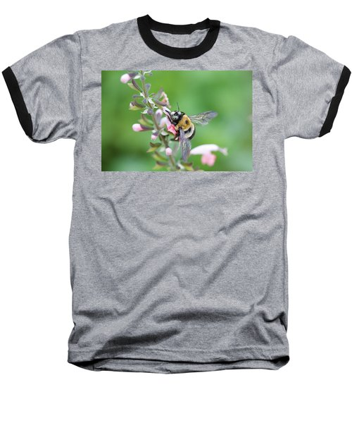 Foraging For Nectar Baseball T-Shirt