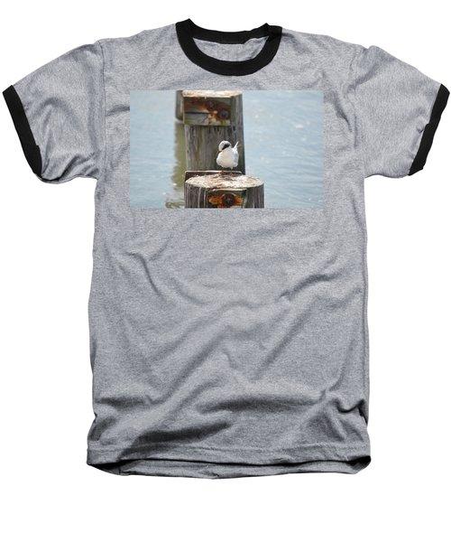 Forster's Tern Baseball T-Shirt