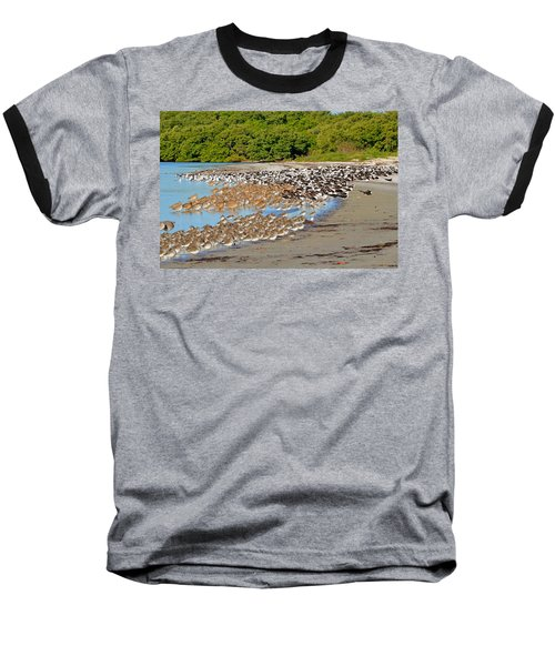 Four Species Of Birds At Roost On Tampa Bay Beach Baseball T-Shirt by Jeff at JSJ Photography