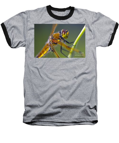 Four Spotted Chaser Baseball T-Shirt