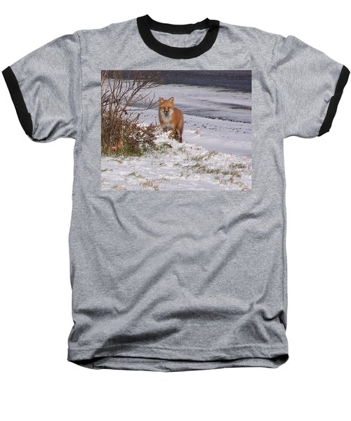 Fox In My Yard Baseball T-Shirt