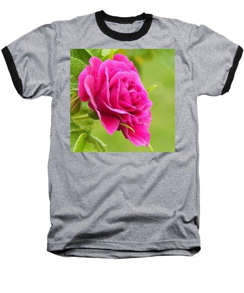 Friendship Rose Baseball T-Shirt