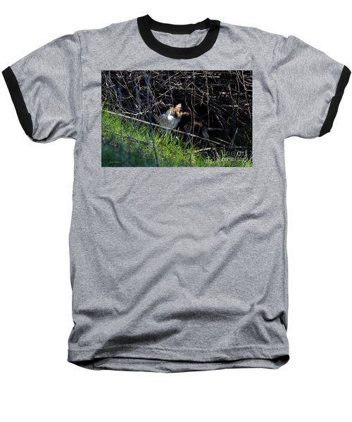 Frightened Feral Calico  Baseball T-Shirt by Susan Wiedmann