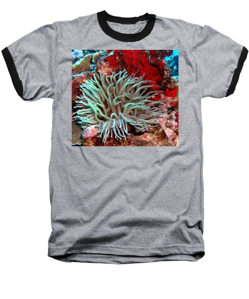 Giant Green Sea Anemone Against Red Coral Baseball T-Shirt