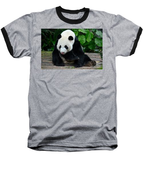 Giant Panda With Tongue Touching Nose At River Safari Zoo Singapore Baseball T-Shirt