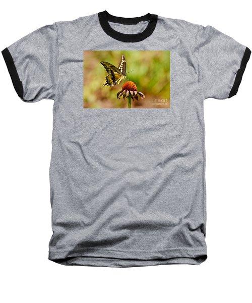 Giant Swallowtail Butterfly Baseball T-Shirt by Kathy Baccari