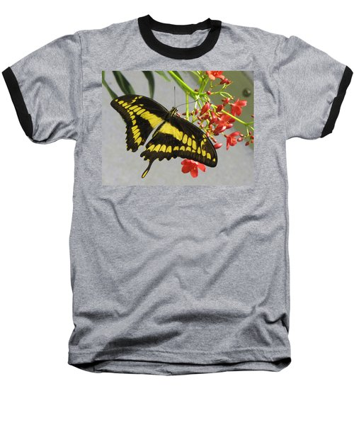Giant Swallowtail Baseball T-Shirt
