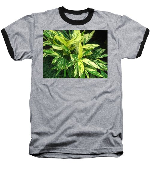 Ginger Lily. Alpinia Zerumbet Baseball T-Shirt by Connie Fox